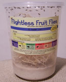 flightless fruit fly culture